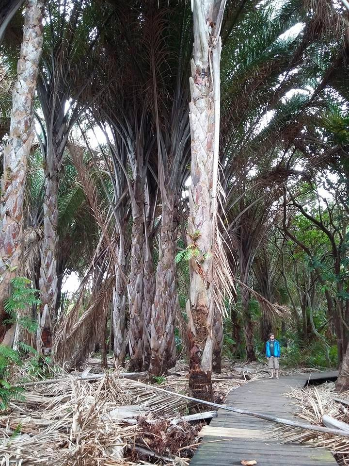 Raphia Palm Forest, Mtunzini