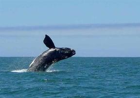 Whale Coast Accommodation