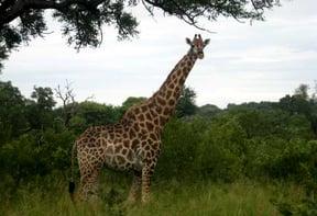 Kruger Surrounds Accommodation