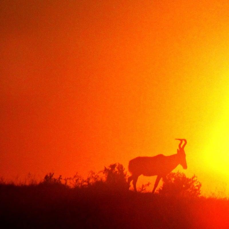 Sunrise at Addo Elephant National Park
