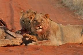 Kgalagadi National Park Accommodation