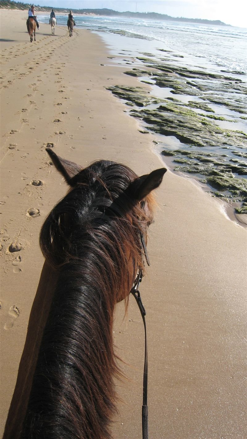 Horse riding on Tofinho Beach