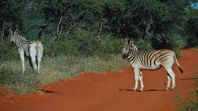 Mokala National Park Accommodation