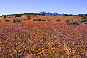 Namaqua National Park Accommodation