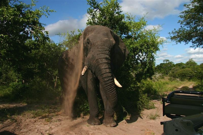 Tembe Elephant Park Model.PageTitle