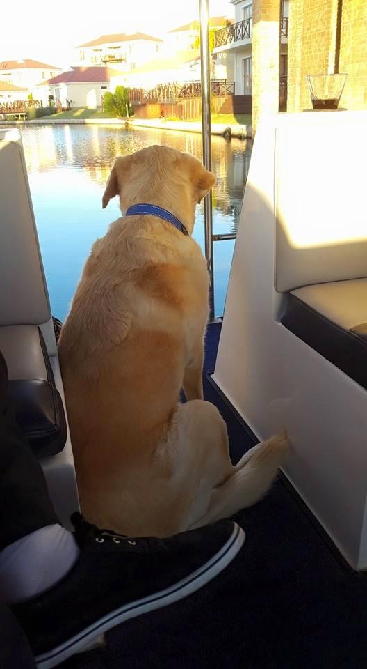 Whiskey the dog goes cruising at Marina Martinique