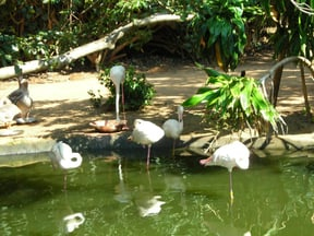 CrocWorld has many species of birdlife which can be viewed in their natural habitat
