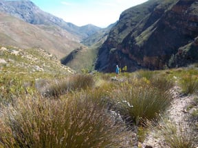 There are many interesting stories about the road to Greyton which leads up to the mountains and dwindles at a precipice. Old-timers rumbled up the valley with supplies and road materials. The pass was never completed. The labourers were from the city and did not have a good reputation. Money apparently vanished.